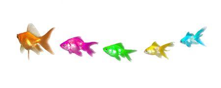 Goldfishes Leadership and Diversity - Many beautiful goldfishes isolated on white background (can be used individually) photo