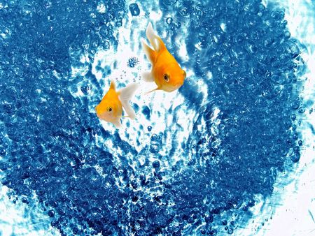 Eco-friendly Energy Source Environmental Protection Goldfish photo