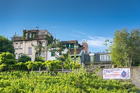 citytrip: Paris, France - August 14, 2016:  The Vineyard of Montmartre, the most famous of the Parisian vineyards. Its wine is quite expensive; the earnings are used to help social institutions.
