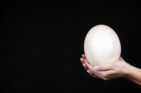 A woman s hand holding an ostrich egg photo