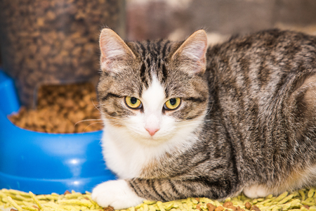 portrait of european type cat in animal shelter in belgium