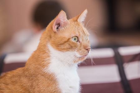 European cat living in an animal shelter Stock Photo