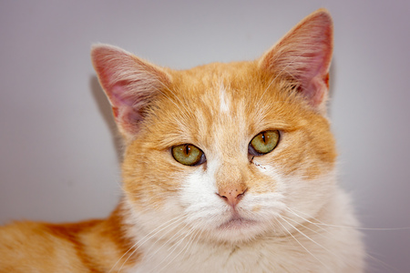 An european cat living in animal shelter in Belgium