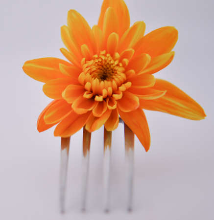 Flower on a fork on white background