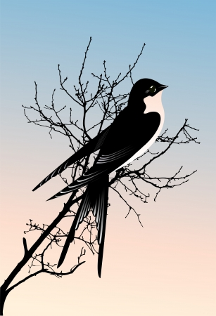 Swallow on a tree Vector
