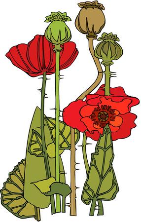 Red poppy flowers 矢量图像