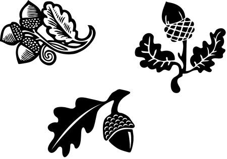 acorns: Black   White Acorn graphic elements Illustration