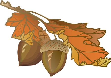 Acorn and leaves Çizim