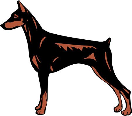 short haired: Doberman Pinscher Dog Illustration