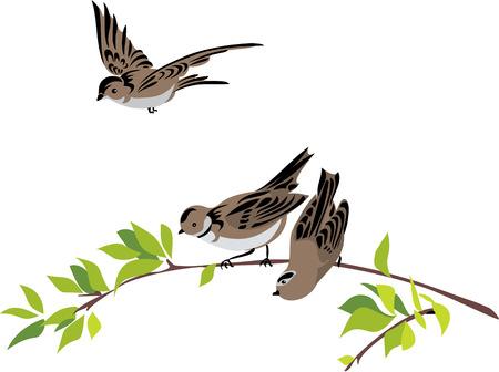 Gorriones Ilustración de vector