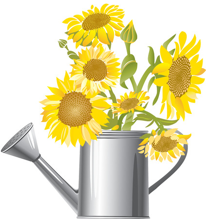 water can: Sunflowers in a water can