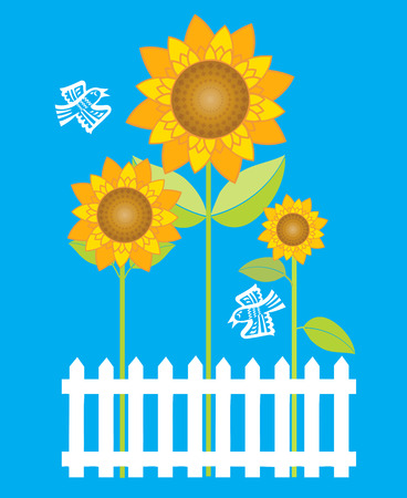 white picket fence: Sunflowers behind white picket fence