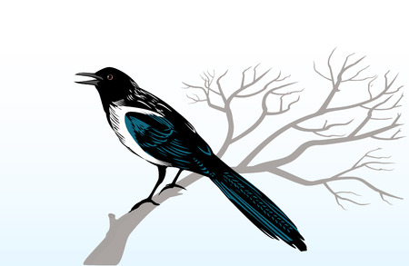 Magpie bird perching on a tree branch