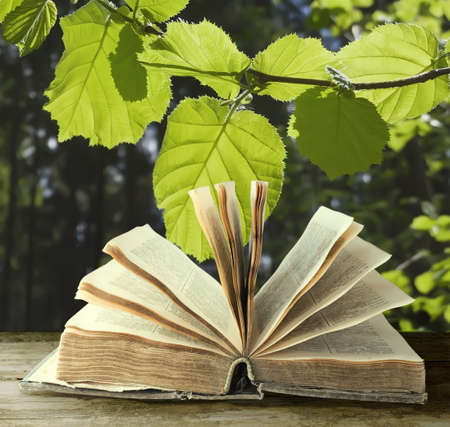 text books:  Opened old book on nature background Stock Photo
