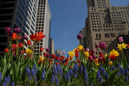 magnificent: Flowers in downtown in spring