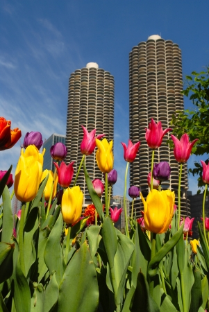 magnificent mile: Beautiful Spring blossoms in Chicago