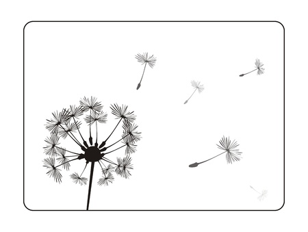 dandelion wind: Dandelion silhouette on white background. Retro illustration with black frame. Indian summer