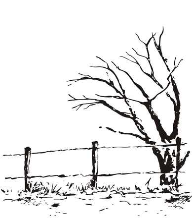 plats: Lonely tree with fence. Vector nature illustration isolated on white background. Black ecology autumn, spring or winter landscape. Illustration