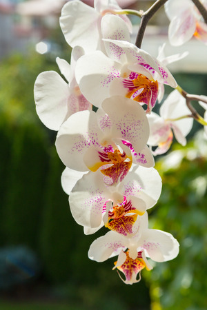 Orchid white flowers Stock Photo
