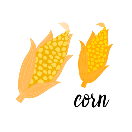 Cartoon bright Corncob orange. Vector ilustration isolated on white background. Autumn seasonal eco vegetable design.