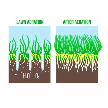 Lawn aeration stage illustration. Gardening grass lawncare, landscaping service. Vector isolated on white background