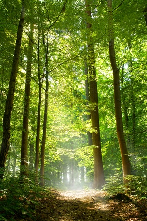 Sunny forest with fog