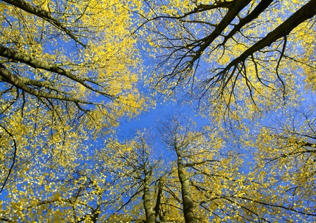 upwards: View upwards in autumn forest Stock Photo