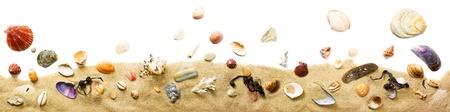 seashells: Beach border