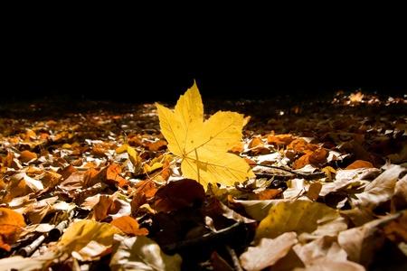 sunspot: Autumn leaf Stock Photo