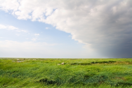 salt marsh: Salt marshes