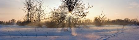 sun shade: Sun in a tree in winter