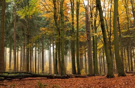 foresta: Bosco misto in autunno Archivio Fotografico