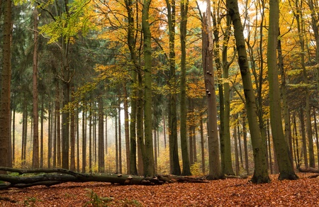 Mixed forest in autumn photo