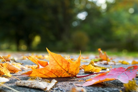 Autumn leaves on pavement photo