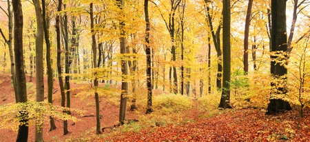 beech leaf: Winding path in autumn forest