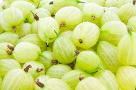 grosella: Grosellas verdes frescas