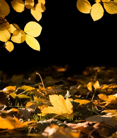 sunspot: Yellow autumn maple leaf in a sunspot between the trees Stock Photo