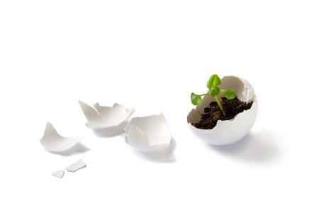 Plant in eggshell photo