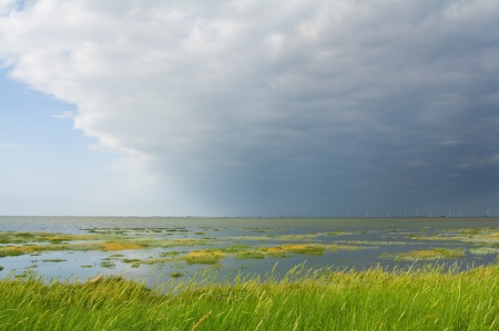 Salt marsh at the coast of Nordfriesland, Germany photo
