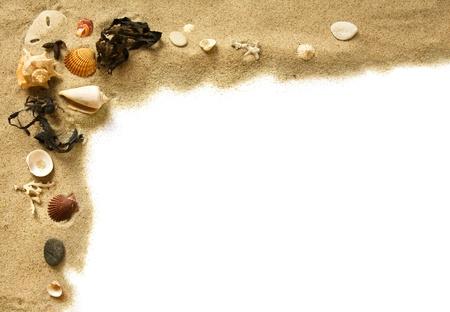 seashell: Beach border