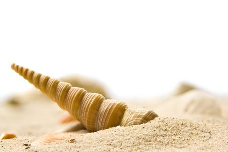Macro image of a beautiful sea shell on a beach