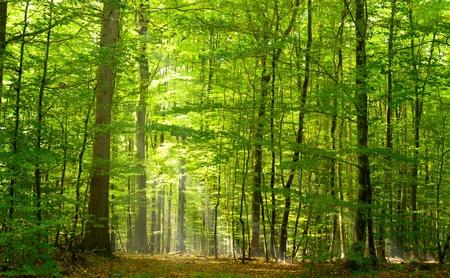 Caducifolio bosque en verano