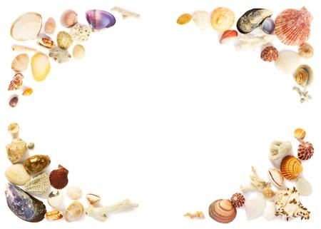 Seashells frame Stock Photo