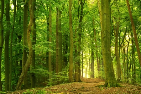 Beautiful green mixed deciduous forest in summer