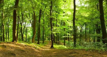 Panorama of a path through a lush green summer forest photo