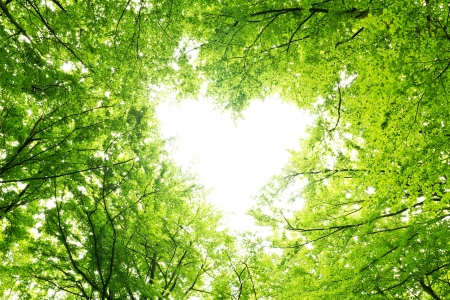 tree canopy: Heart shaped opening in a canopy of leaves