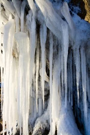Big icicles on a tree with sunlight Stock Photo