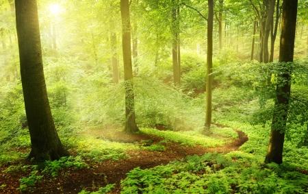 arboleda: Niebla por la mañana en un bosque verde de verano en Alemania.