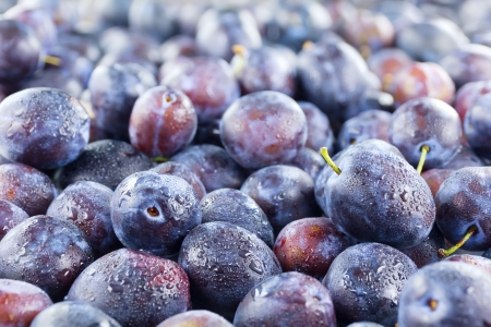 Full frame image of a large group of fresh plums
