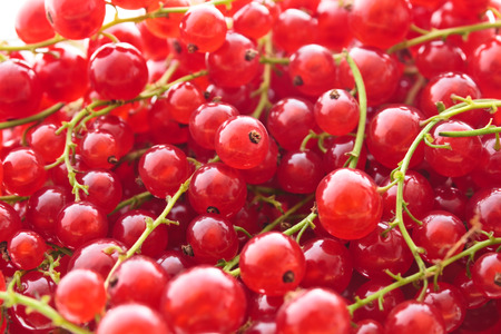 full frame: Full frame image of a heap of red currant. Small depth of field. Stock Photo